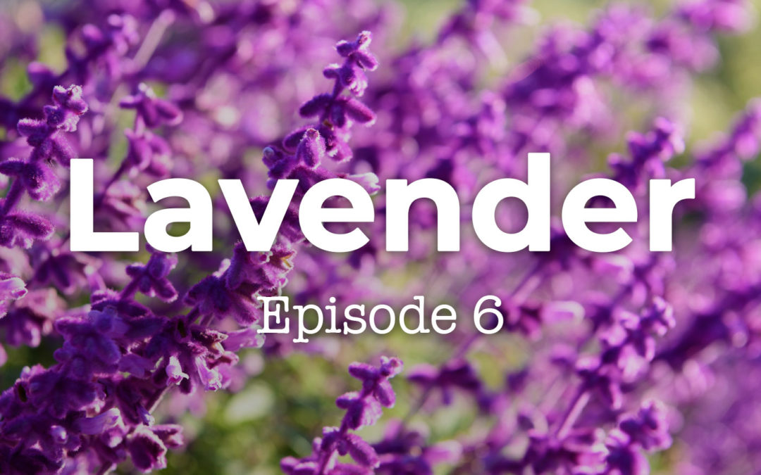 Feels and Flowers Episode 6 - Talking about Lavender