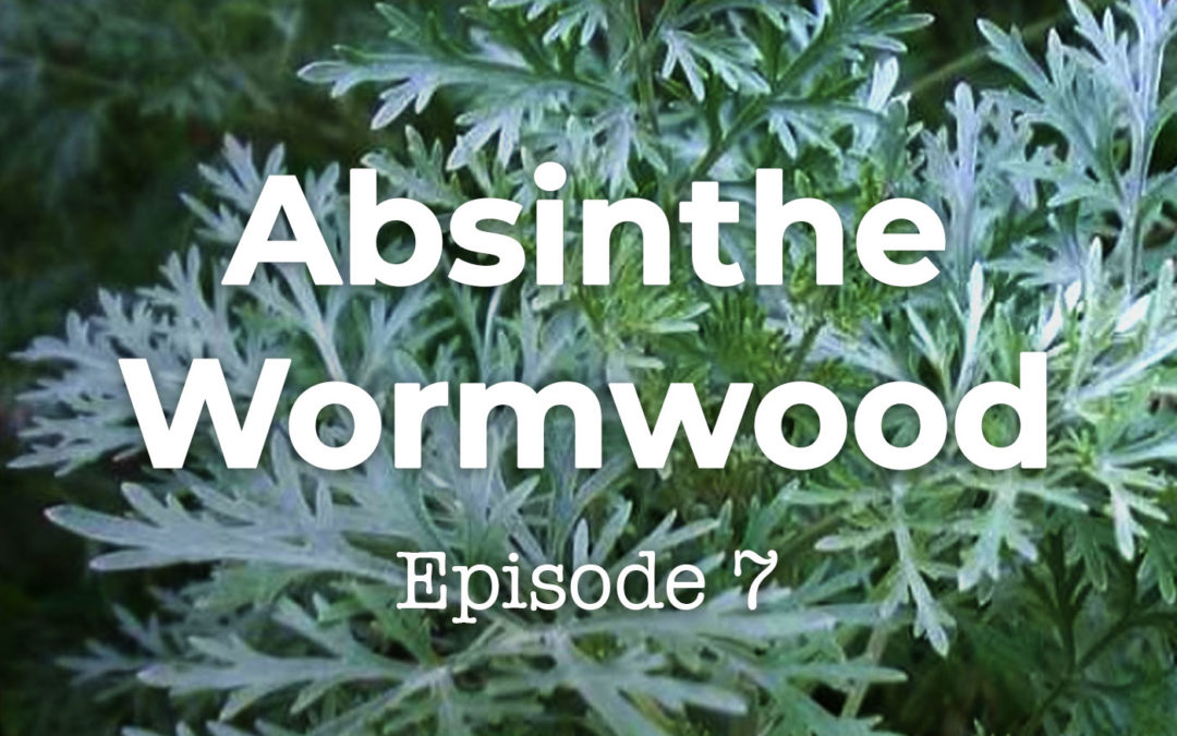 Feels and Flowers Episode 7 - Talking about Absinthe Wormwood