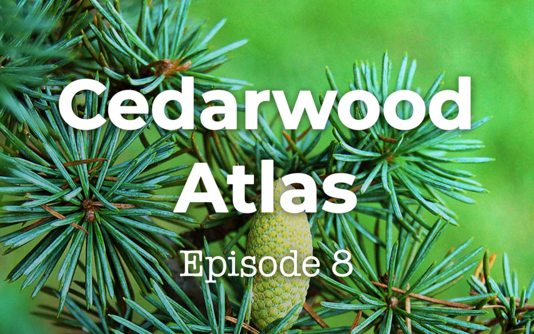 Feels and Flowers Episode 8 - Talking about Cedarwood Atlas